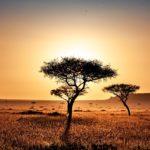 Kenia atardecer